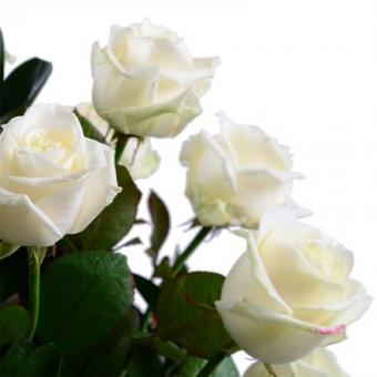Gera diena – Gėlės į namus Vilniuje