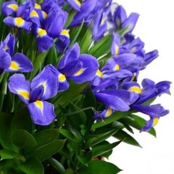 Laimės pintinė – Gėlių pristatymas Vilniuje