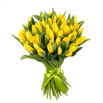 geltonos tulpes