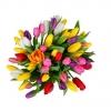 Tulpės Mix – Gėlių pristatymas Vilniuje