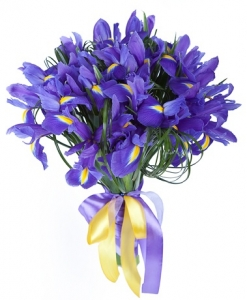 Irisai