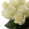 Baltos rožės 3
