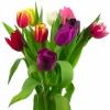 Тюльпаны «Микс» 2