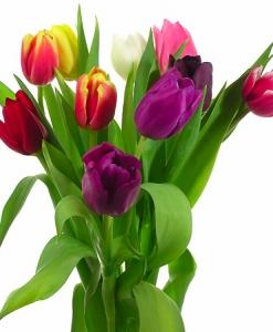 """Тюльпаны """"Микс"""""""