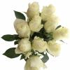 Baltos rožės 4