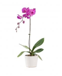 Orchideja