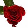 """5 žvaigždučių rožės """"PREMIUM"""" 80-90cm 2"""