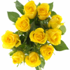 Желтые розы 4