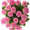Rožinės rožės 4