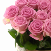Rožinės rožės 3