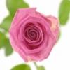 Rožinės rožės 2